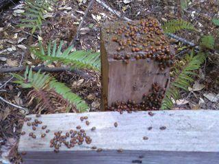 Ladybug Vacation Spot